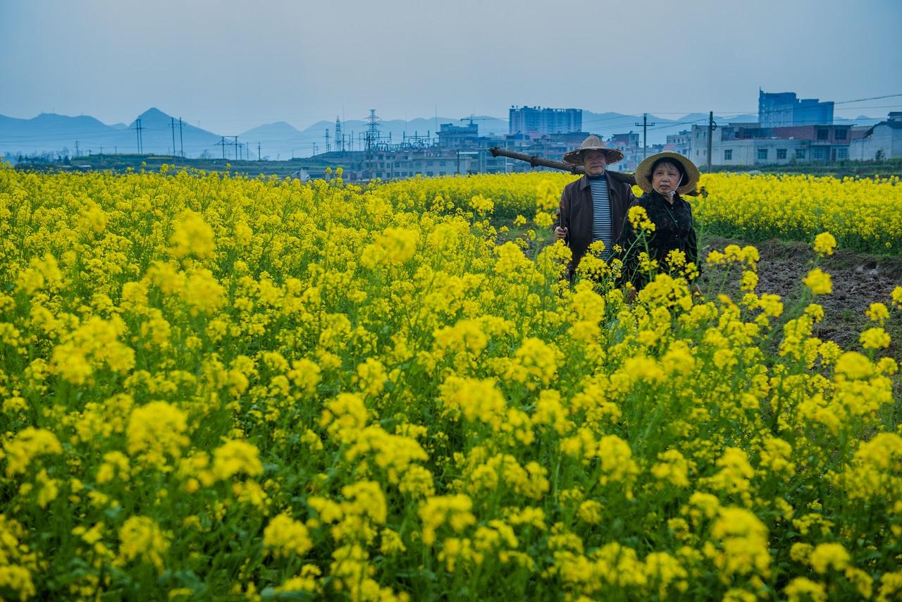 Four Springs di Lu Qingyi: cronache familiari nella Cina odierna
