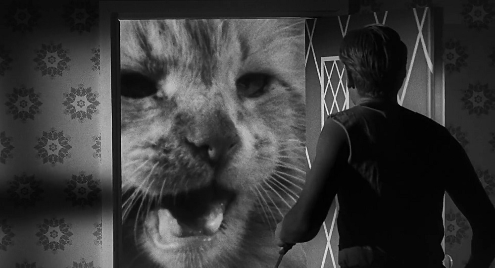 The Incredible Shrinking Man recensione gatto