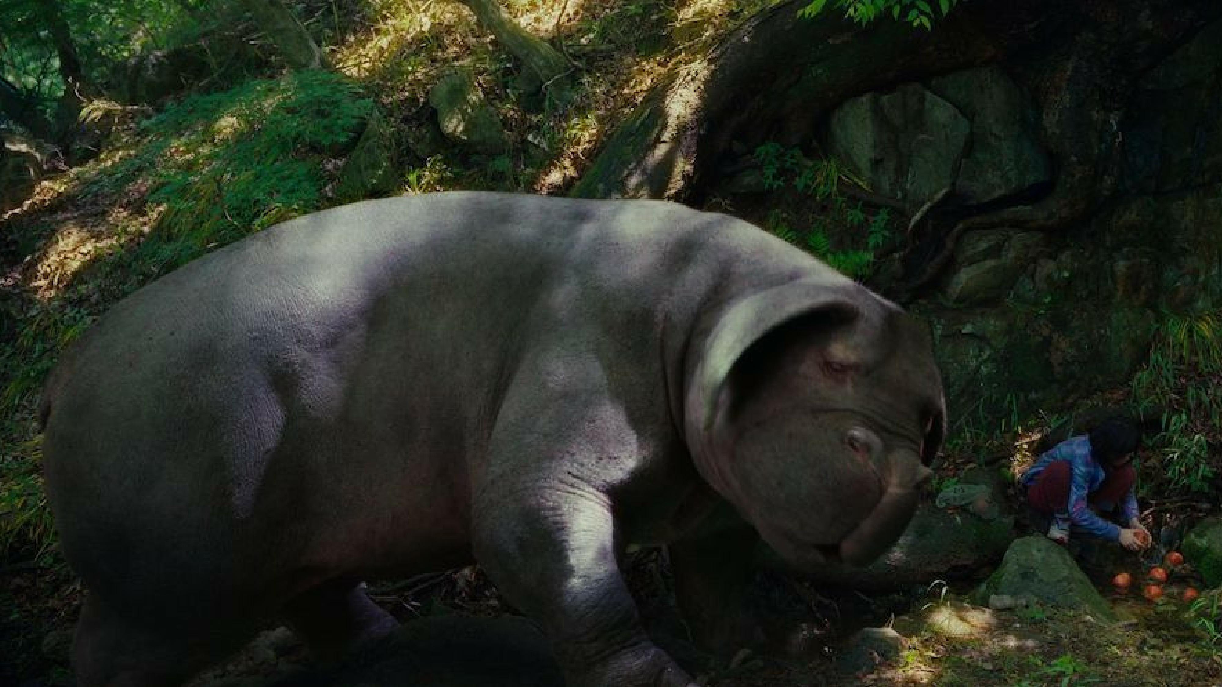 L'eterna contraddizione umana in Okja